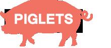 株式会社ピグレッツ
